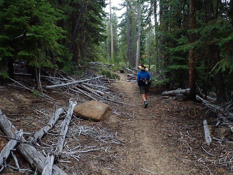 Near the start of the Yamsay Mountain Trail