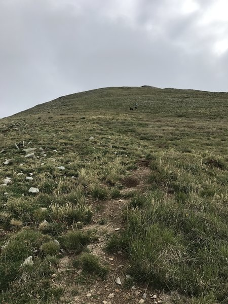 View of the climb to the top of Mann's Peak. Note the dog and the woman way up ahead.