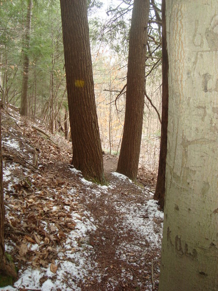 East side of North Swan Creek Trail