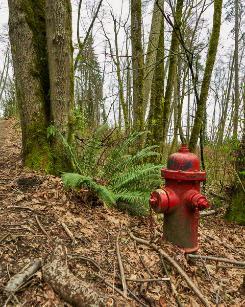 A fire hydrant by the side of the trail - a fun little reminder that this beautiful park is in an urban setting.