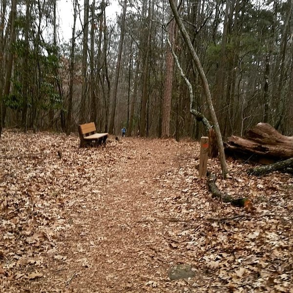 Environmental Loop Trail at Kennesaw Mountain. Easy short hike for families with benches along the way for resting.