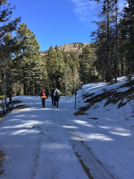On the long, long section of Forest Service road, covered in ice and snow