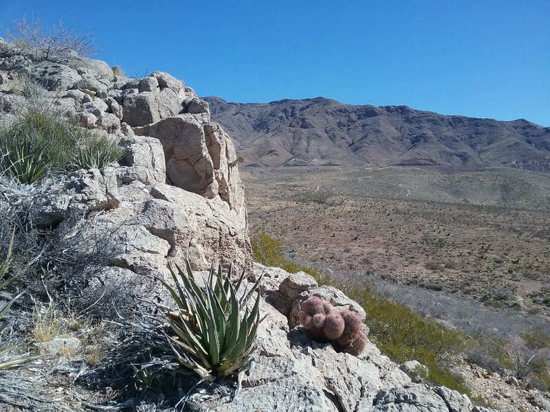 View of the Franklin Mountains and Texas Rainbow cactus