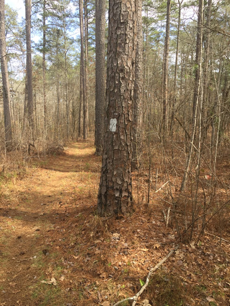 The trail has clear blazing and generally offers wide singletrack.