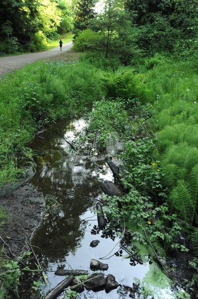 Jogger on a path, stream, trees, stones, reflections, Cowan Park, Seattle, Washington, USA