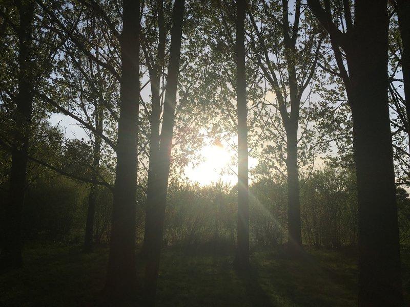 Summers evening in Suffolk