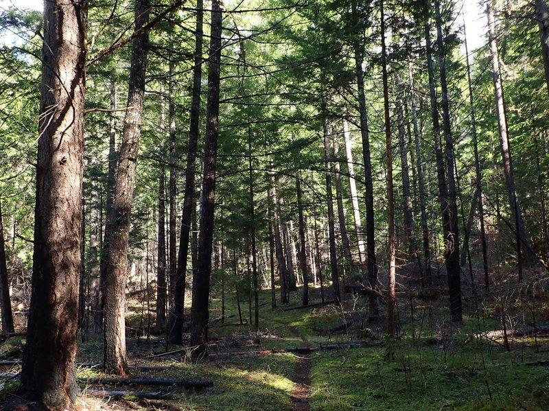 Along the Soda Springs Trail