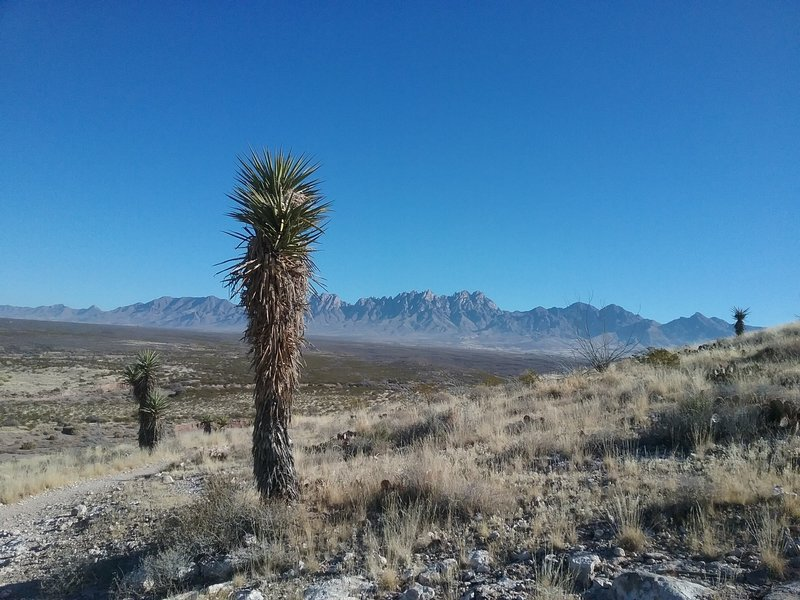 View of the Organ Mountains and soaptree Yucca
