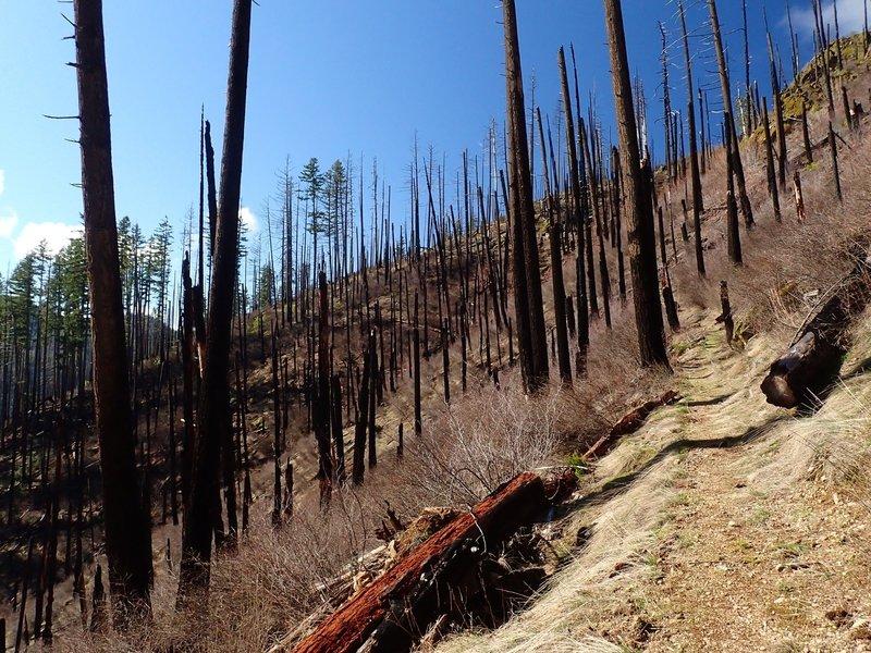 Climbing through the burned area