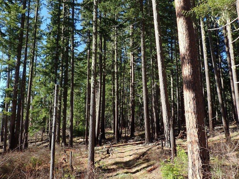 Reaching the edge of Pine Bench