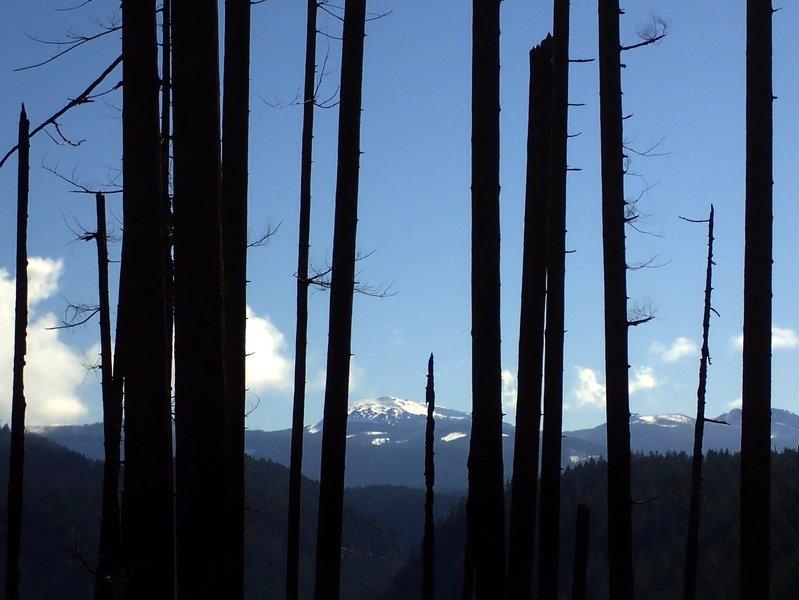 Diamond Peak from Pine Bench