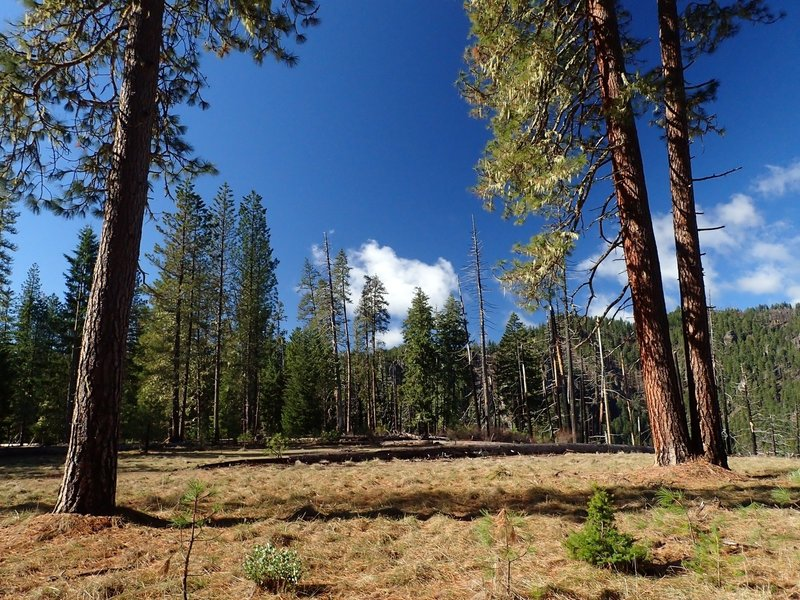 The open, grassy area at Pine Bench