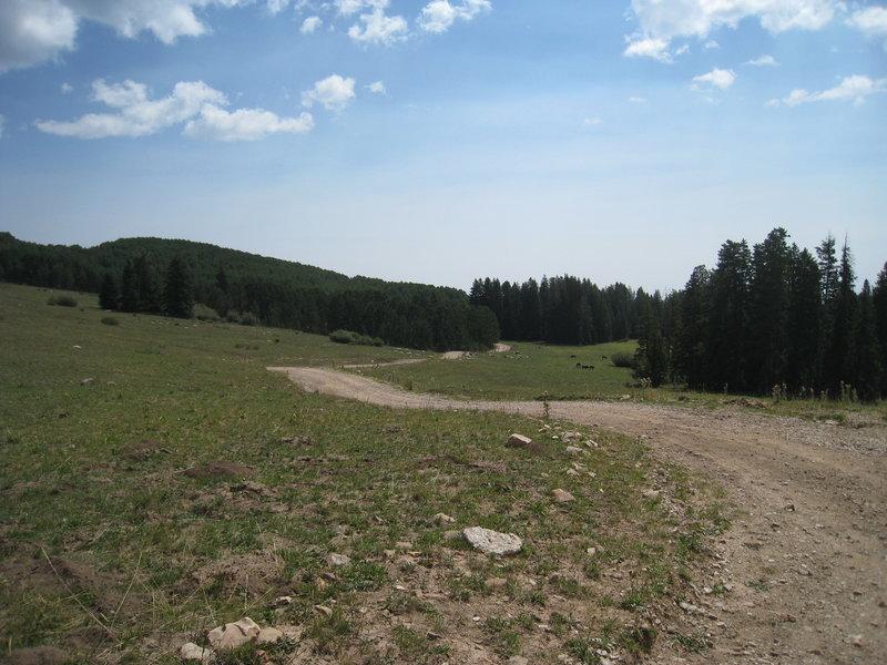 Near Burlfriends Trail #88.