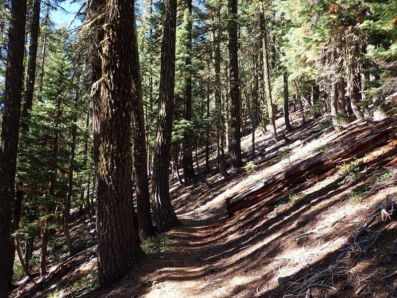 The Maidu Lake Trail climbs toward the Pacific Crest Trail