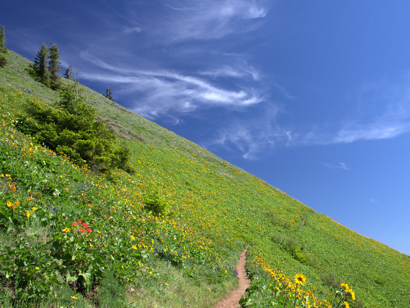 The Dog-Augspurger Tie Trail in early summer