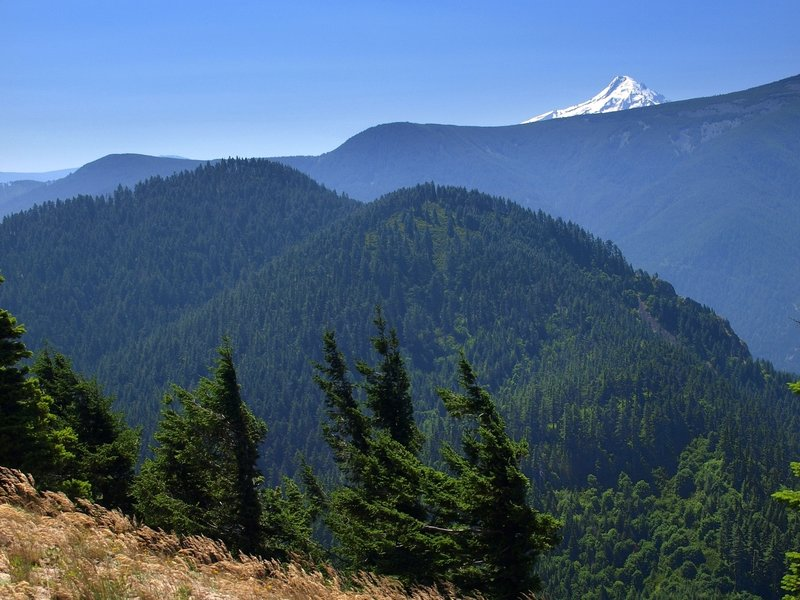 Mount Hood from the Augspurger Trail