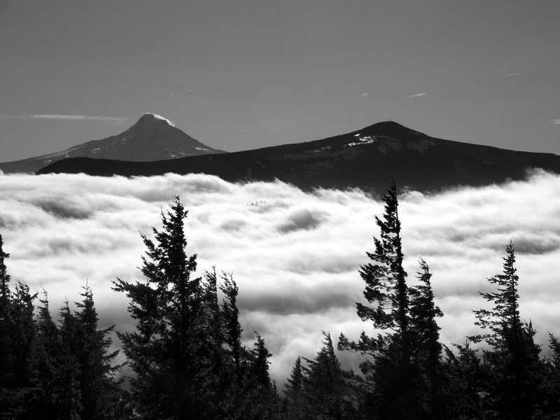 Mt. Hood (L) and Mt. Defiance (R) from the Augspurger Trail