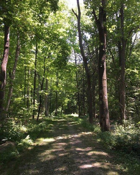 Skylands - New Jersey Botanical Garden.
