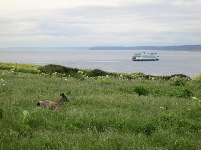 Deer and ferry.