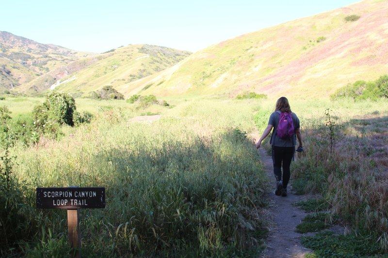 Beginning of Scorpion Canyon Loop Trail.