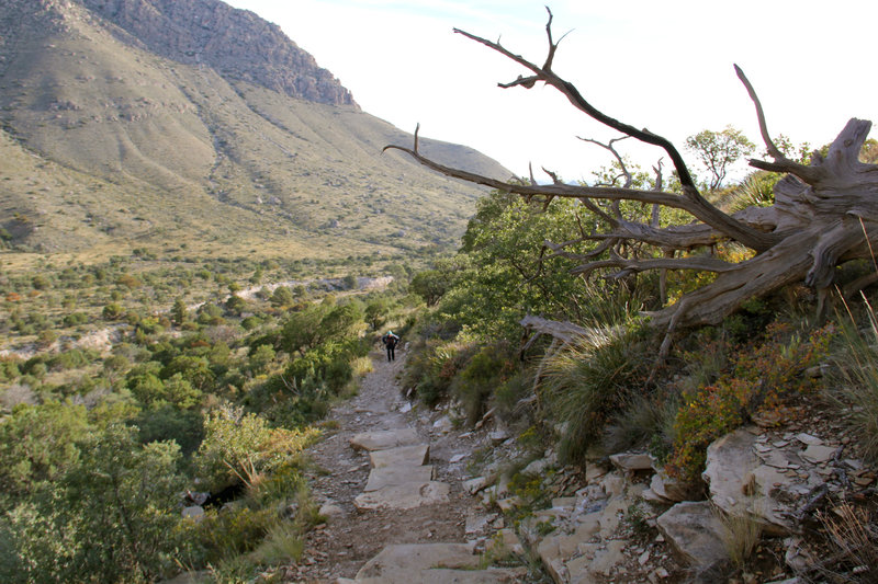 0.25 miles after beginning the Guadalupe Peak Trail.