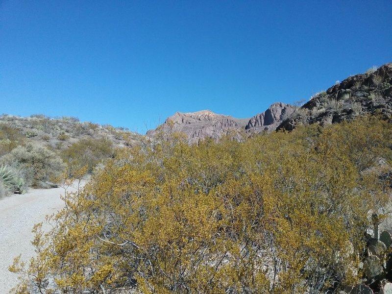 Walking down the arroyo towards the mountain. Nice scenery.