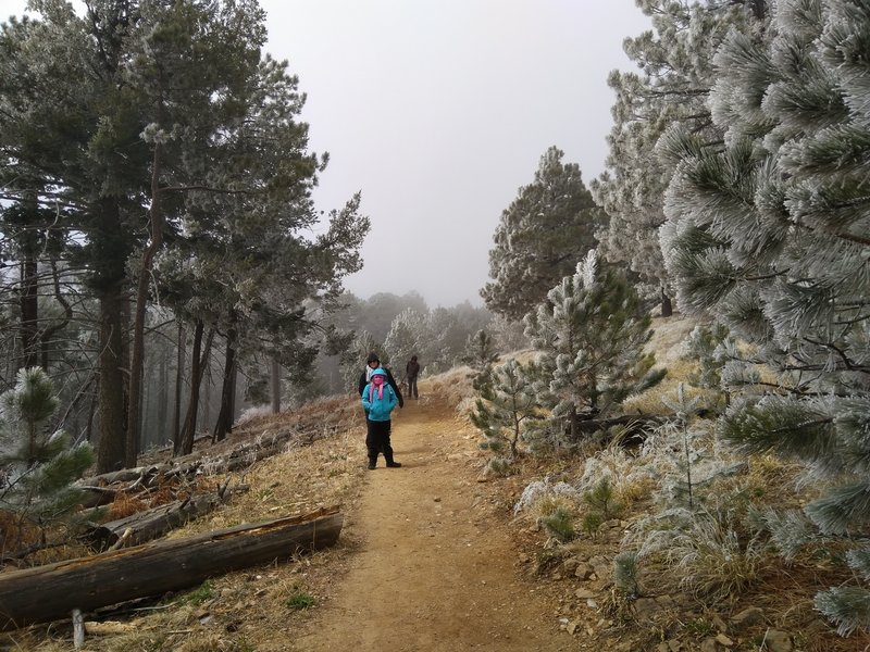 A beautiful spring day on the Meadow Trail as some snow was moving through.