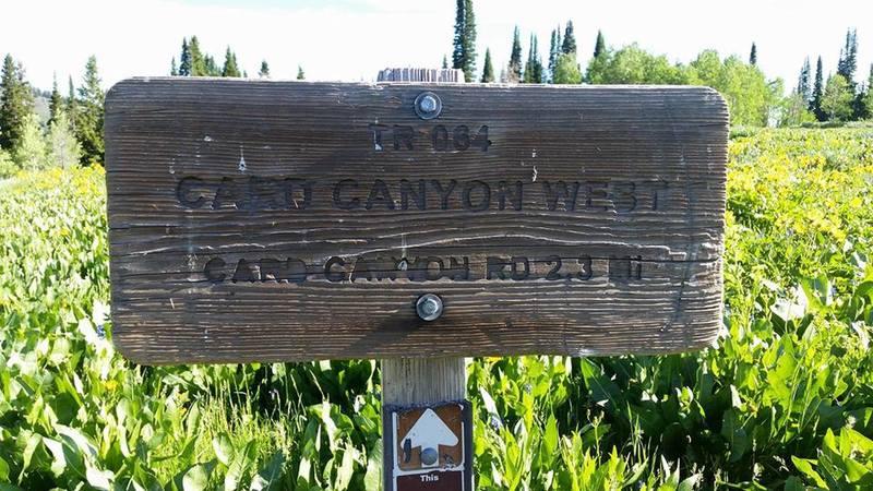 Card Canyon Sign