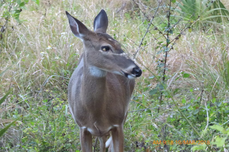 Deer are common here.