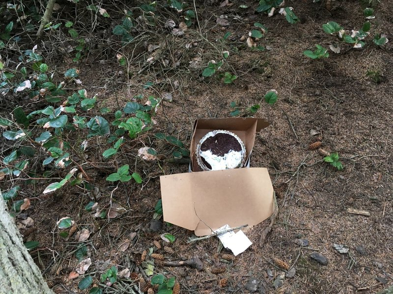 Yes, that is a cake, yes, in the forest, yes, we threw it away.
