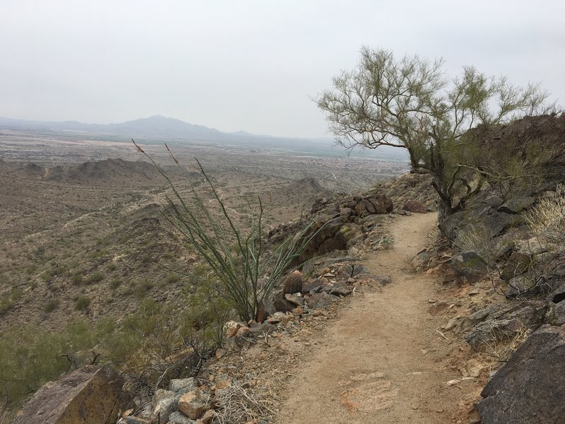 Trees and cacti give this trail some character