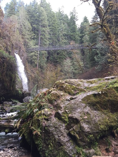 The 65 foot Drift Creek Falls with the 240 foot suspension bridge in the background.
