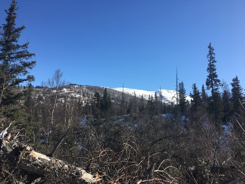 Look at Dome Trail summit
