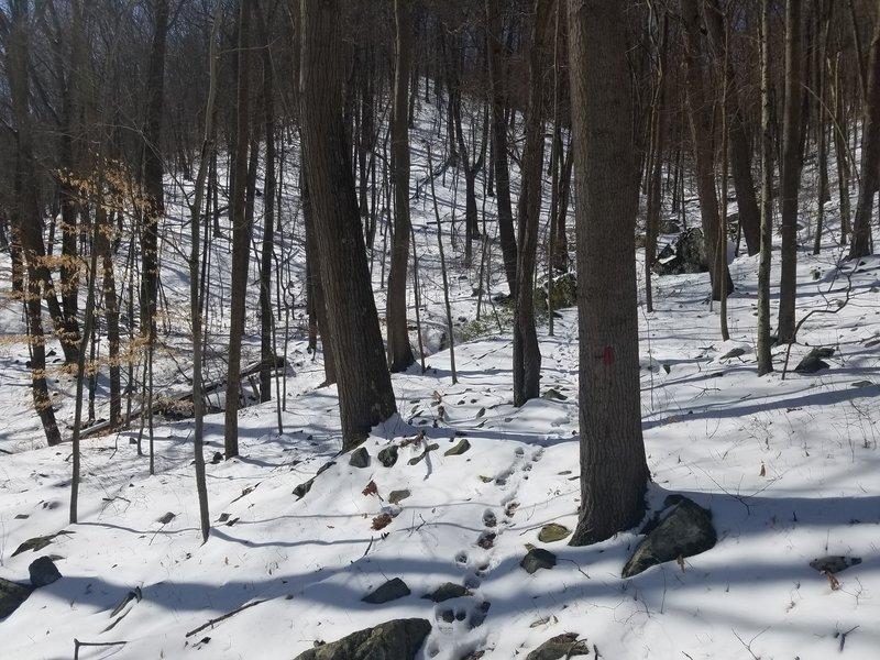 Snowy Day on Pine Knob Trail
