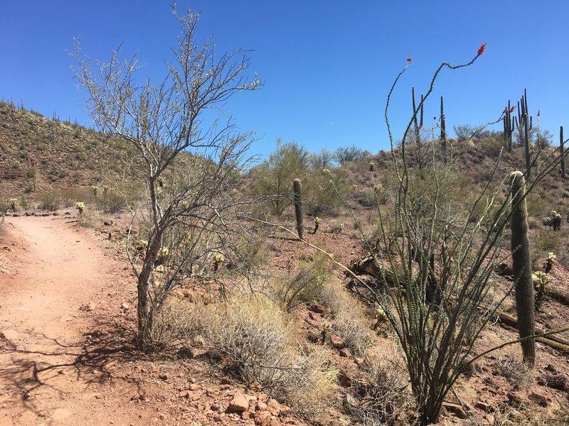 The desert landscape along Pipe Canyon