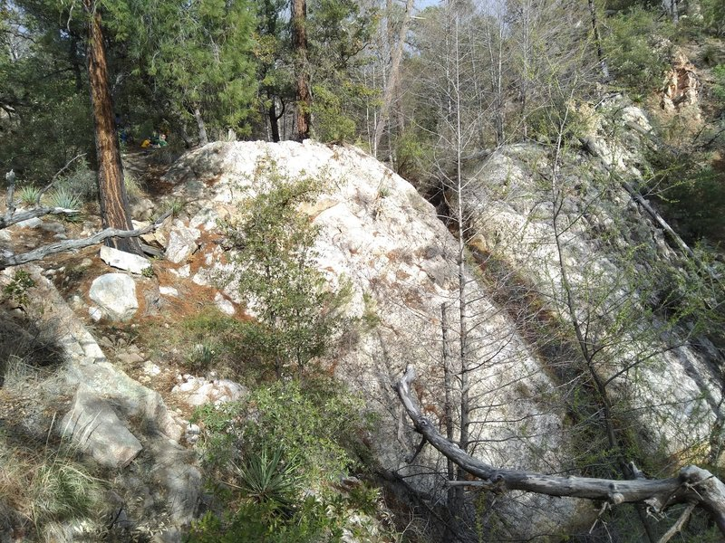 A flowing waterfall among oaks, junipers, and pines just off the trail in Romero Canyon