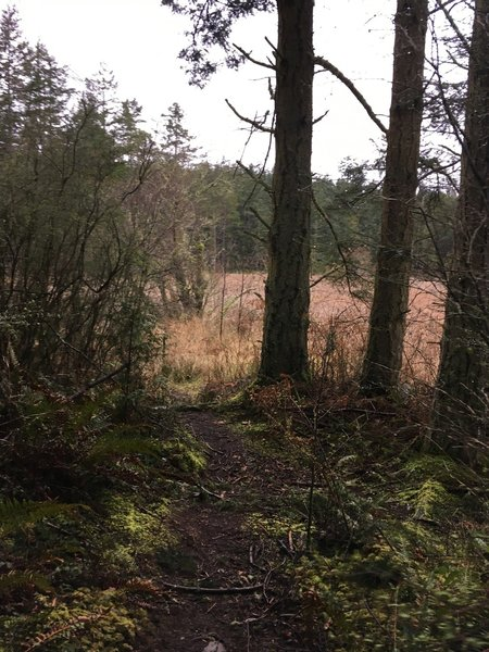 Looking towards the swampland that is to the right of the trail.