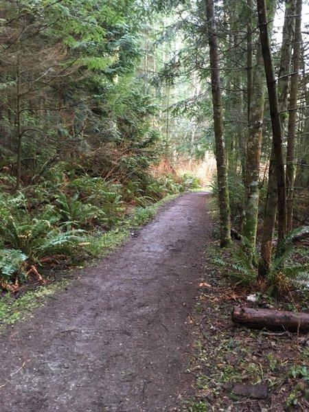 Sares Head Trail.