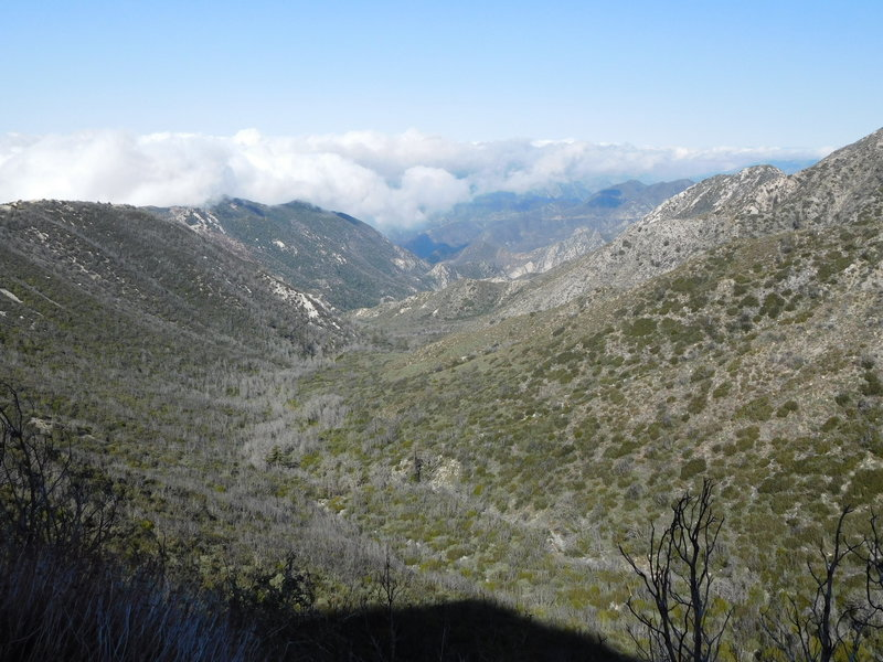 Upper Bear Canyon with Brown Mountain