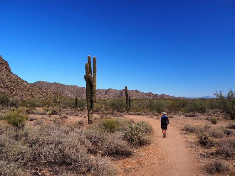 On the Waddell Trail