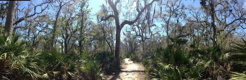 Coastal forest.