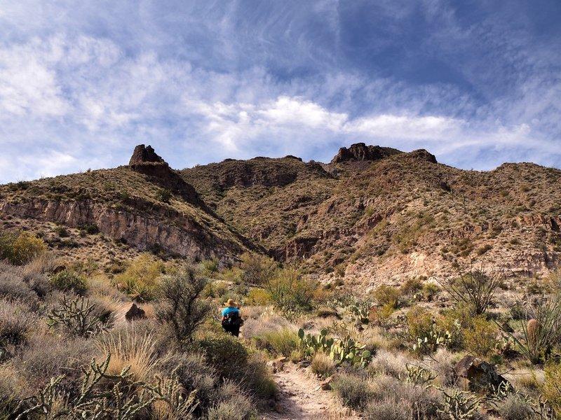 Along the Elephant Mountain Trail