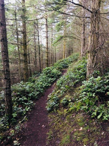 Pigeon Ridge Trail.
