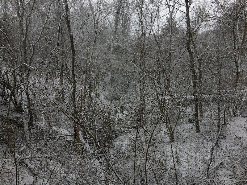 Ravine off the scenic bridge at the North Nature Trail