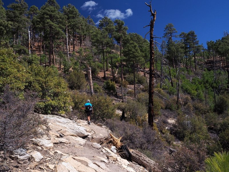 Along the Aspen Trail