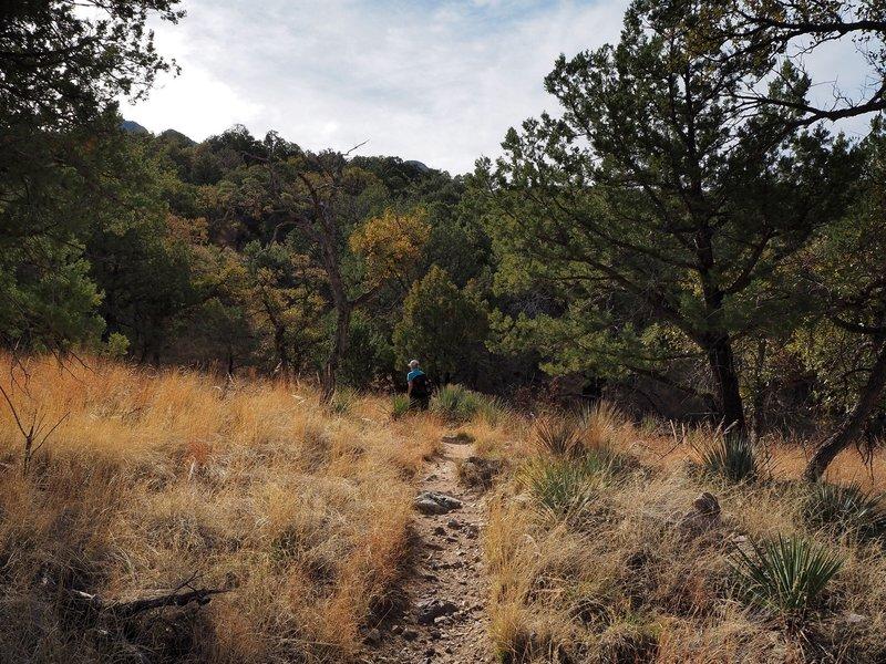 Along the Bog Springs Trail