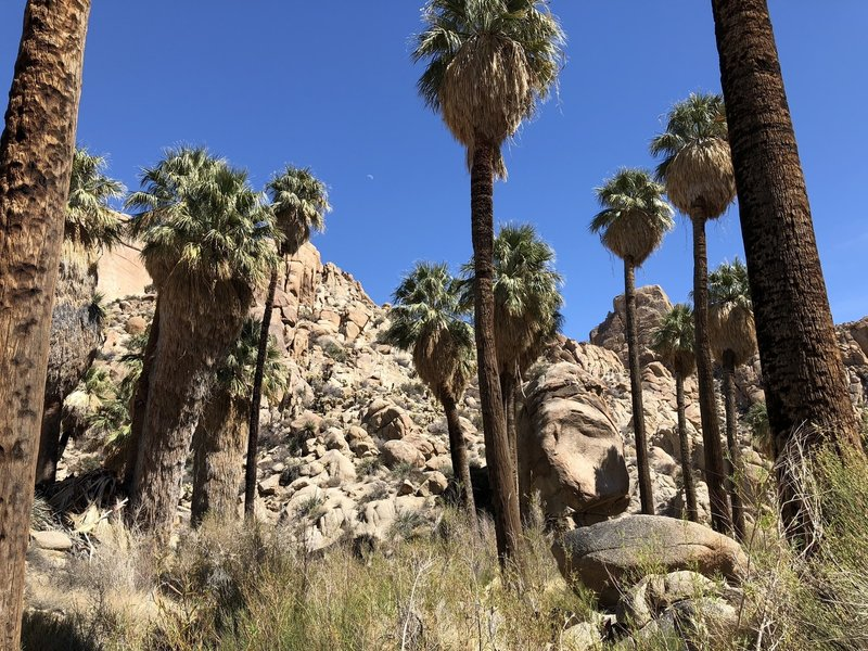 The Lost Palms Oasis