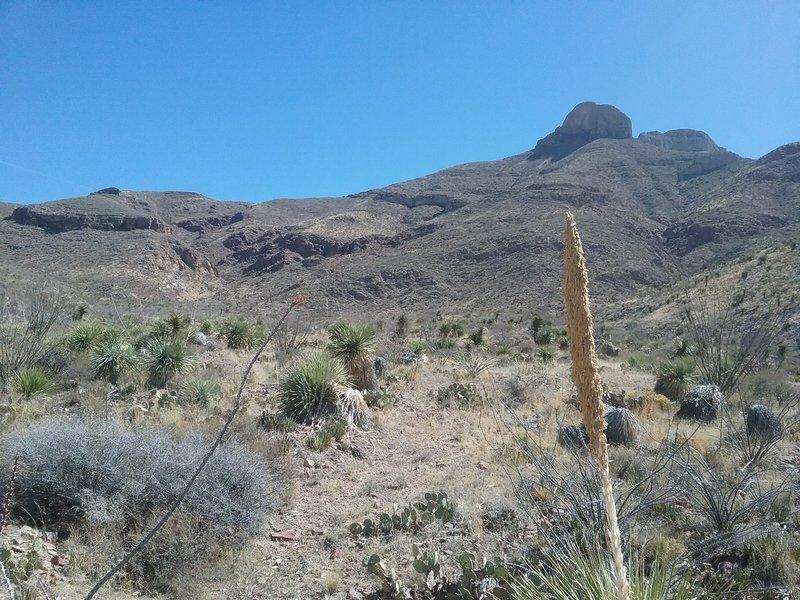 Looking up Quad Burner Trail