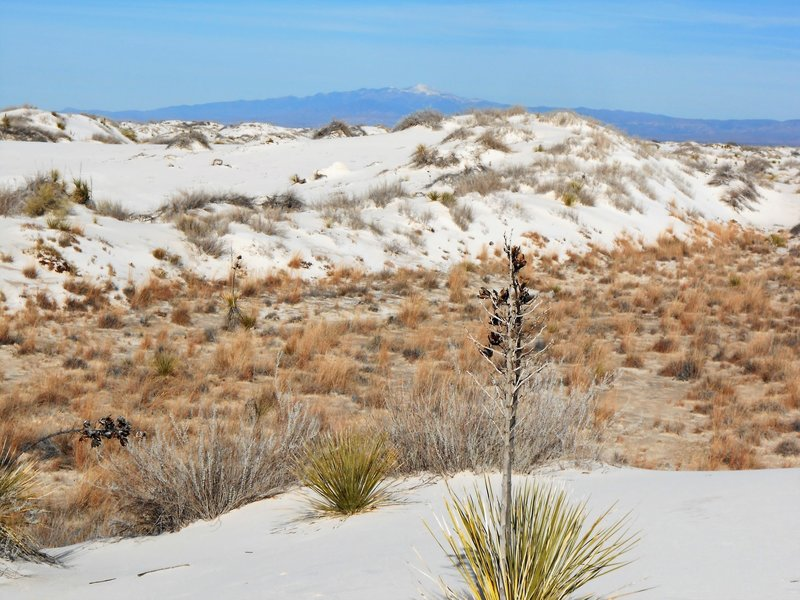 View of dunes and Sierra Blanca