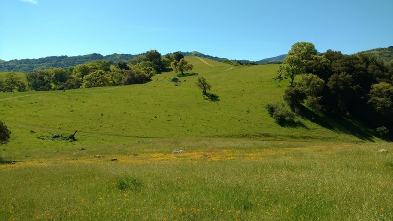 Vista del Oro Trail climbs through fields of spring wildflowers, to its high point.